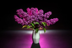 Purple lilac in a white vase on a black background. Syringa. Lilac twigs. Bouquet of purple lilac. Flowers in the studio on a black background. Flowers photographed on a black background. Vase