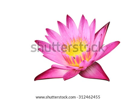 Purple lotus on white background