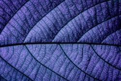 Purple Natural Macro