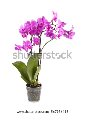Purple orchid close up. Beautiful flower. Nature. #567936418