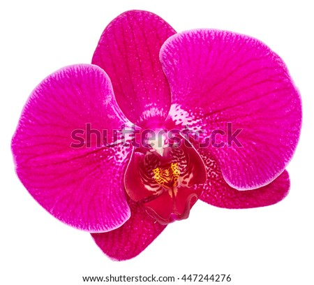 purple orchid flower close up...