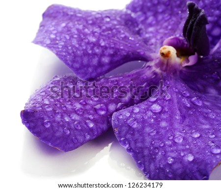 Purple And White Orchid Flowers Purple Orchid Flower Isolated