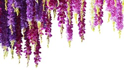 Purple orchid flowers in line hanging down in vertical. Isolated on white background. Photo with clipping path.