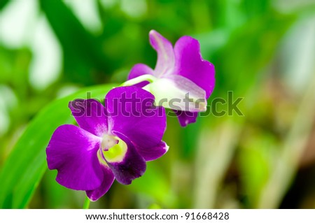 Purple orchid in Thailand Airport