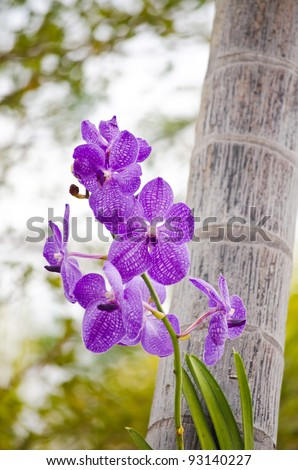 Purple orchid in the park. - stock photo