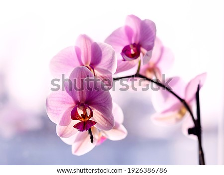 purple orchid on the window Сток-фото ©