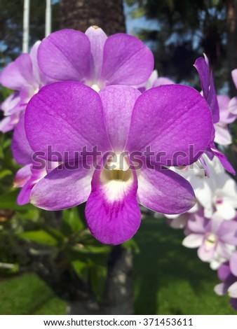 Purple orchids - Shutterstock ID 371453611