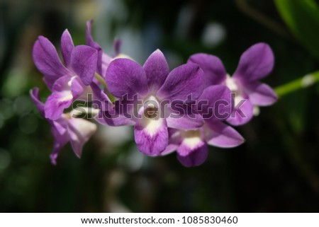 Purple orchids are beautiful flowering bouquet, Grows fast, grows fast, grows fast and grows throughout the year. #1085830460