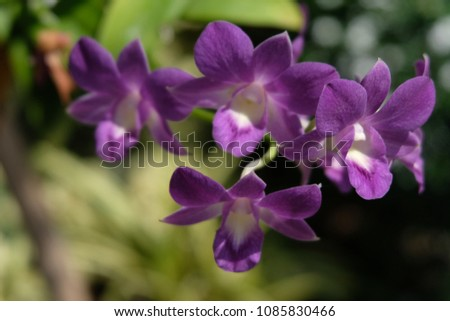 Purple orchids are beautiful flowering bouquet, Grows fast, grows fast, grows fast and grows throughout the year. #1085830466