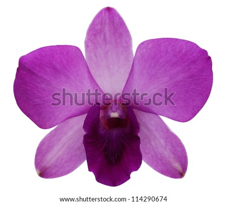 Purple orchids on a white background.