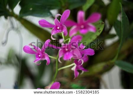 Purple orchids, purple orchids, Purple orchids, purple orchids #1582304185