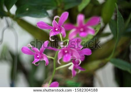 Purple orchids, purple orchids, Purple orchids, purple orchids #1582304188