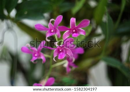 Purple orchids, purple orchids, Purple orchids, purple orchids