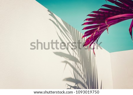 Purple palm leaves against turquoise sky and white wall. Vivid colors, creative colorful minimalism. Copy space for text