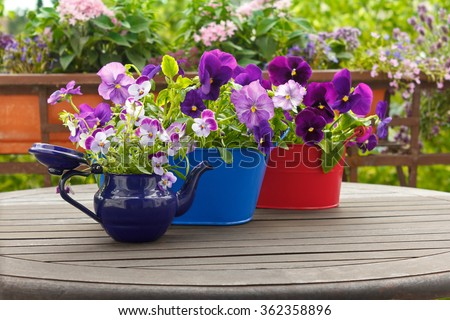 Purple pansy flowers in blue and red pots on a balcony table, copy space, background #362358896