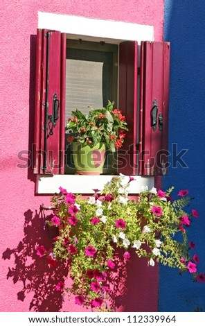 purple petunias in the colourful House of the island of Burano Venice