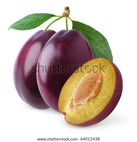 Purple plums on a branch  isolated on white