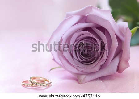 stock photo Purple rose and wedding rings on pink background