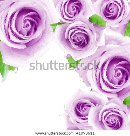 Purple roses making a frame