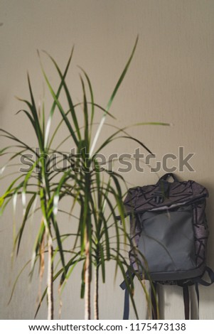 Purple School Backpack Hanging on the Wall - Isolated Object with White Background with Green Plant Besides it, Vintage Film Edit