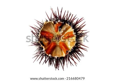 Purple sea urchin roe on a white background Stockfoto ©