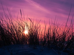 Purple sky at sunset behind marram grass covered dunes