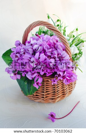 purple spring flowers in a basket