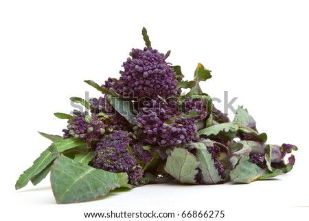 Purple Sprouting Broccoli from low perspective isolated on white. - stock photo