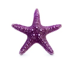 purple starfish isolated on white background