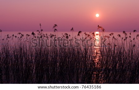 Purple sunset over lake with reed silhouettes