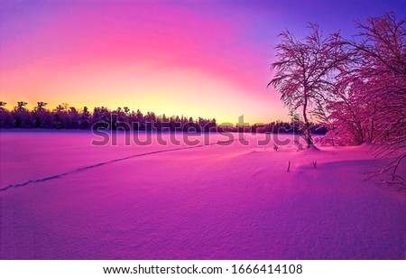 Purple sunset winter forest landscape. Winter snow nature sunset scene. Sunset in winter snow forest. Winter sunset snow nature landscape