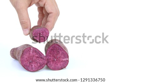 Purple sweet potato in hand asian woman isolated on white background; putting potato to take pictures.