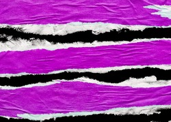 Purple Torn Poster Paper Pieces Isolated Black Background Paper Texture