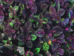 Purple Tropical Leaves Pattern / Natural Pattern Background
