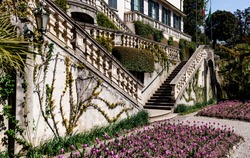 Purple tulips in a garden bed near a chic large house with stairs and balconies.