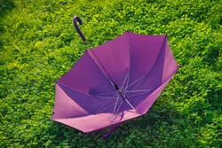 Purple umbrella on a background of bright green grass close-up.