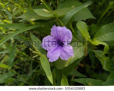 Purple waterkanon in the temple #1056520883