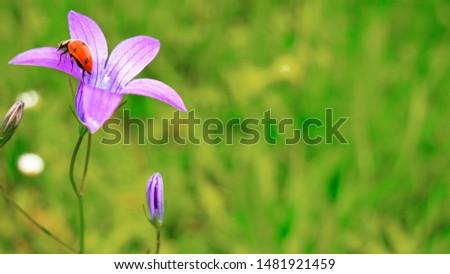 Purple wildflowers bluebells in summer on nature #1481921459