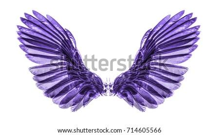 purple wing on black blackground Foto stock ©