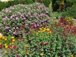 purple, yellow and redflower beds