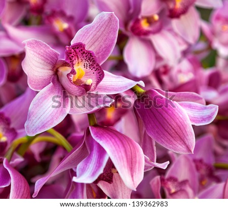 Purples bouquet of orchids. Floral pattern. Abstract background.