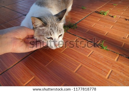 purr sound of gray tabby cat when left hand human scratching at chin while it's crouching on vintage pattern floor in morning light