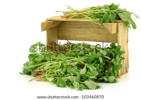 purslane (Portulaca oleracea) in a wooden crate on a white background