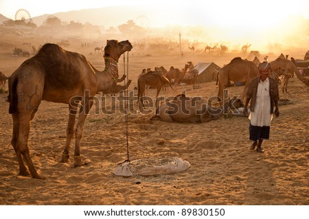 PUSHKAR, INDIA - NOVEMBER 8: An unidentified camel trader attends the Pushkar cattle fair on November 8, 2011 in Pushkar, Rajasthan, India. Pilgrims and camel traders flock to the holy town for the annual fair.