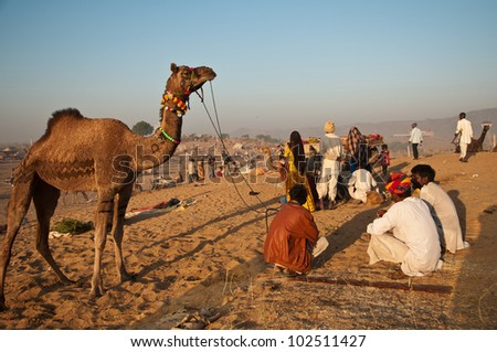PUSHKAR, INDIA - NOVEMBER 7: Camel traders attend the Pushkar cattle fair on November 7, 2011 in Pushkar, Rajasthan, India. Pilgrims and camel traders flock to the holy town for the annual fair. - stock photo