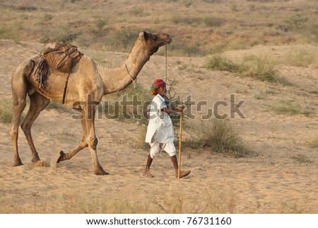 PUSHKAR, INDIA - NOVEMBER 6: Unknown camel herder arrives at the annual Pushkar Camel Fair on November 6, 2008 in Rajasthan, India