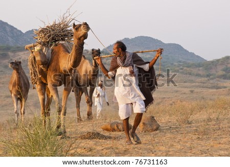 PUSHKAR, INDIA - NOVEMBER 5: Unknown camel herder escorts his camels to the annual Pushkar Camel Fair on November 5, 2008 in Rajasthan, India