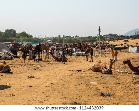 Pushkar Rajasthan, India : October 30, 2017 - Camels in Indian Desert Village for trade in Pushkar Camel Fair #1124432039