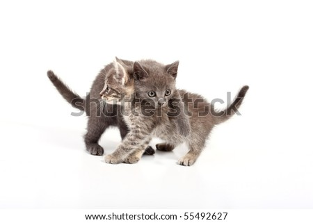 pussy cats