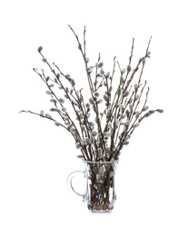 Pussy willow (sallows, osiers) in a glass vessel with water